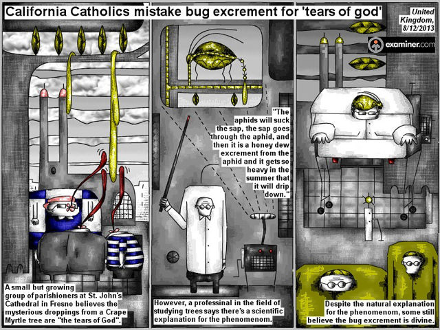 Bob Schroeder | God Aphid | Bug excrements | California Catholics mistake bug excrement for 'tears of god'
